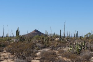 Kakteen und Vulkan auf der Baja California.