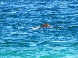Finne des Walhais