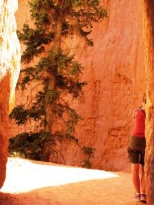 Bryce Canyon: Dame mit Baum vor Sandsteinwand