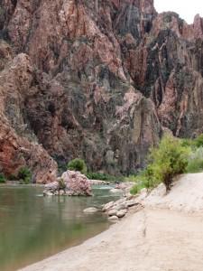 Uferbereich des Colorado Rivers