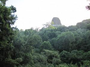 Tika: Eine Tempelspitze ragt aus dem Dschungel