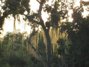 Tikal: Abendstimmung